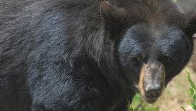 Medvěd chtěl Pavlovi prokousnout lebku! Manželka napadeného popsala útok šelmy