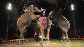Konec zvířat v cirkusech? Ministerstvo zemědělství chce změnit zákon