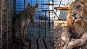 Zoo z pekla! Zvířata hladoví a trpí. Zachránci čekají na povolení. Úřady ale mají času dost