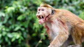 """Penzistu (†72) ukamenovaly k smrti opice. """"Zatkněte  je,"""" prosí bratr policii"""