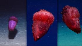 """Vědci natočili v oceánu podivné monstrum: Přezdívají mu """"bezhlavé kuře""""!"""