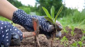 Zbavte se obtížně hubitelných plevelů, teď je nejvhodnější čas