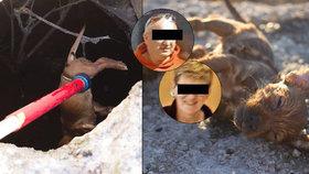 Otřesná kauza týrání zvířat! Štěňata v žumpě prý utopili policisté
