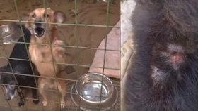 Hrůza v rodinném domě v Mladějově: 79 psů se brodilo vlastními výkaly!