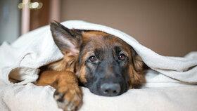 Pozor na podzimní deprese! Nevyhýbají se ani psům a kočkám