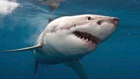 Dvojitý útok žraloka na oblíbené pláži: Napadl holčičku (9) i její babičku