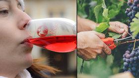 Oslavy svatomartinského vína začínají o tři dny dřív: Tipy, kam vyrazit na košt!