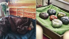 Češi se loučí se psy, kočkami, ale i se slepicí. Za kremaci mazlíčků neváhají utratit tisíce