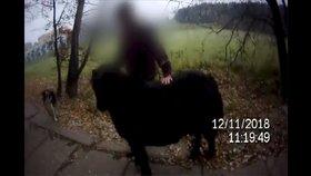 VIDEO: Poníka - útěkáře chránil bodyguard pes! Společně špacírovali rušnou ulicí v Brně
