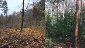 """U filmových ateliérů pokáceli stromy kvůli nákaze. """"Zmizel tady kus lesa,"""" nadávají místní"""