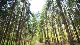 Klánovický les jen pro pěší? Radnice Prahy 21 se zaobírá nepříjemnými stížnostmi