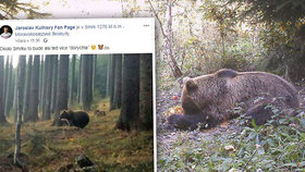Medvěd míří na Ostravu! Na hoře Smrk ho vyfotil Král cyklistiky Kulhavý