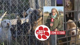 Blesk tlapky udeřily na množírnu labradorů: Psi měli falešné pasy, policie zmáčkne veterináře