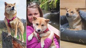 Střídavá péče u psů je stále častější, odborníci se bouří: Je to o chování majitelů, říká Mirka