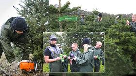 c51aa41dd47 České Vánoce začínají v Dánsku  350 000 stromků odtud přiveze jen Mountfield
