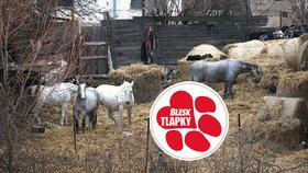 """Farma hrůzy: Kozy na balkoně, koně mezi odpadky. Majitelka se """"vypařila"""""""