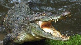 """""""Zabil dítě."""" Posvátní krokodýli terorizují obyvatele ostrova, ti se nemohou bránit"""