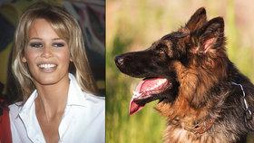 Claudia Schiffer má doma zabijáka: Její pes zakousl březí ovci a potrhal dvě další!