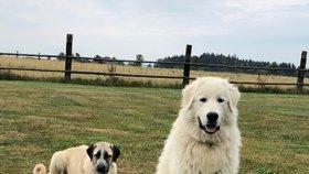 Andy a Růžena jsou doma! Ztracené psy nakonec pomohli najít myslivci