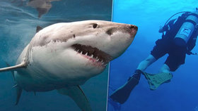 Žralok v Egyptě napadl dalšího turistu: Potápěči se zakousl do nohy!
