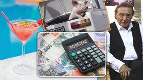Co řešily letos pojišťovny? Prase za volantem, pavouka v kufru i falešného Karla Gotta