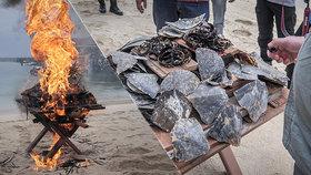 Velký úspěch českých ochránců přírody! V Indonésii stopli ilegální obchod s želvovinou