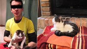 Kočka Kessi uvízla na 8 dní na stromě: Ze 17 metrů ji sundal statečný arborista!