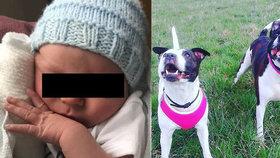 Smrtící útok na malé miminko: Stafordšírští bulteriéři prokousli novorozenci hlavu!