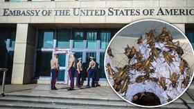 """Za zvukovými """"útoky"""" na ambasádu může být hmyz, tvrdí vědci. Podezřívají cvrčky"""