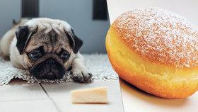 Kousek sýra pro domácího mazlíčka? Jako byste sami snědli tři koblihy! Takhle překrmujeme své miláčky