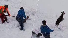 Kamzík zapadal u trati, ale lidé ukázali srdce. A další sníh míří do Česka