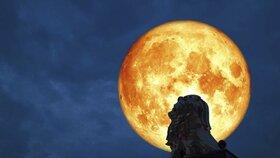 Vlčí úplněk ve Lvu – využijte sílu šelem