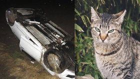 Kocour způsobil vážnou nehodu na Českolipsku! Za jízdy skočil na řidiče