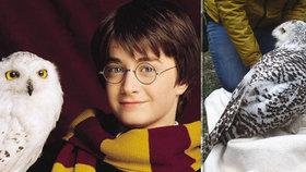 Hasiči vysvobodili Hedviku Harryho Pottera: V Bohumíně visela zamotaná na stromě