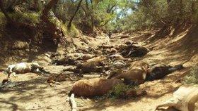 Australské horko zabíjelo. U vyschlého napajedla našli 90 mrtvých koní