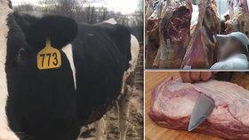 Konec problémových jatek: Vláda jim dala stopku, maso z nemocných krav se už na trh nedostane