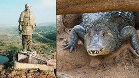 Turisty ohrožují stovky krokodýlů u nejvyšší sochy světa. Indové je pochytají a odvezou