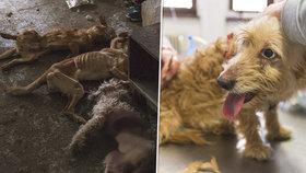 Neuvěřitelná zrůdnost: Žena se odstěhovala a 16 psů nechala napospas osudu! Šest nepřežilo
