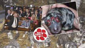 Páni poslanci, trápí vás trýznění psů v množírnách? Přísnější zákon už máte na stole!