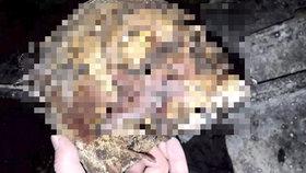 Patrik na hřbitově zneuctil ostatky a všechno si natočil! Video zvrhlíka našli policisté na facebooku