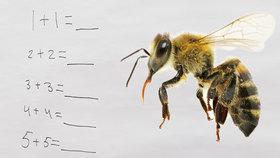 Včelí mozek je schopný jednoduchých výpočtů, včetně sčítání a odčítání (ilustrační foto)