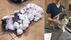 """""""Sněhulku"""" našli zmrzlou na kost. Kočka veterinářům ale roztála pod rukama"""