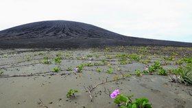 Vědce fascinuje lepkavé bahno na nově vzniklém ostrově. Bují na něm život