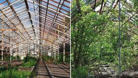 Strnadovo zahradnictví vstane z mrtvých? Na místě mají vyrůst i rodinné domy