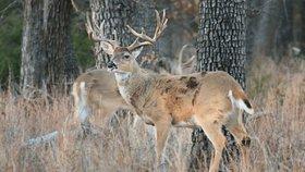 """Nemoc dělá z jelenů """"zombie"""". Mohla by se rozšířit i mezi lidi, varuje expert"""