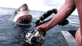 Lidožravý žralok doplaval přímo k lodi. Potápěč vzal čelisti jako výzvu