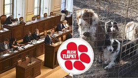 """""""Týrají hlavně psychopati."""" Tyrani ubližují psům, koním i ptákům, poslanci řešili tresty"""
