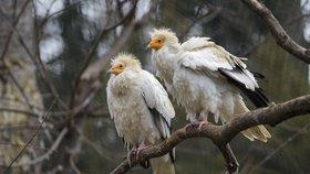 Lilly a Endy vyrazili do Bulharska. Delegace ze Zoo Praha odvezla supy a poštolky