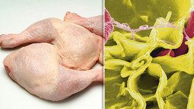 Tuna polského kuřecího se salmonelou v Česku. Část masa skončila v restauracích