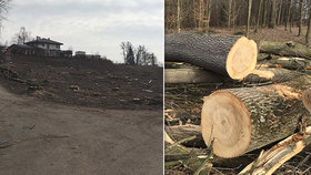 Porubský masakr motorovou pilou: Lesníci vykáceli naráz 200 stromů! Radnice nic netušila